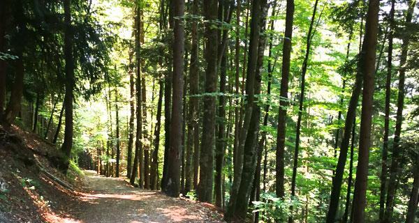 Holz Nachhaltigkeit