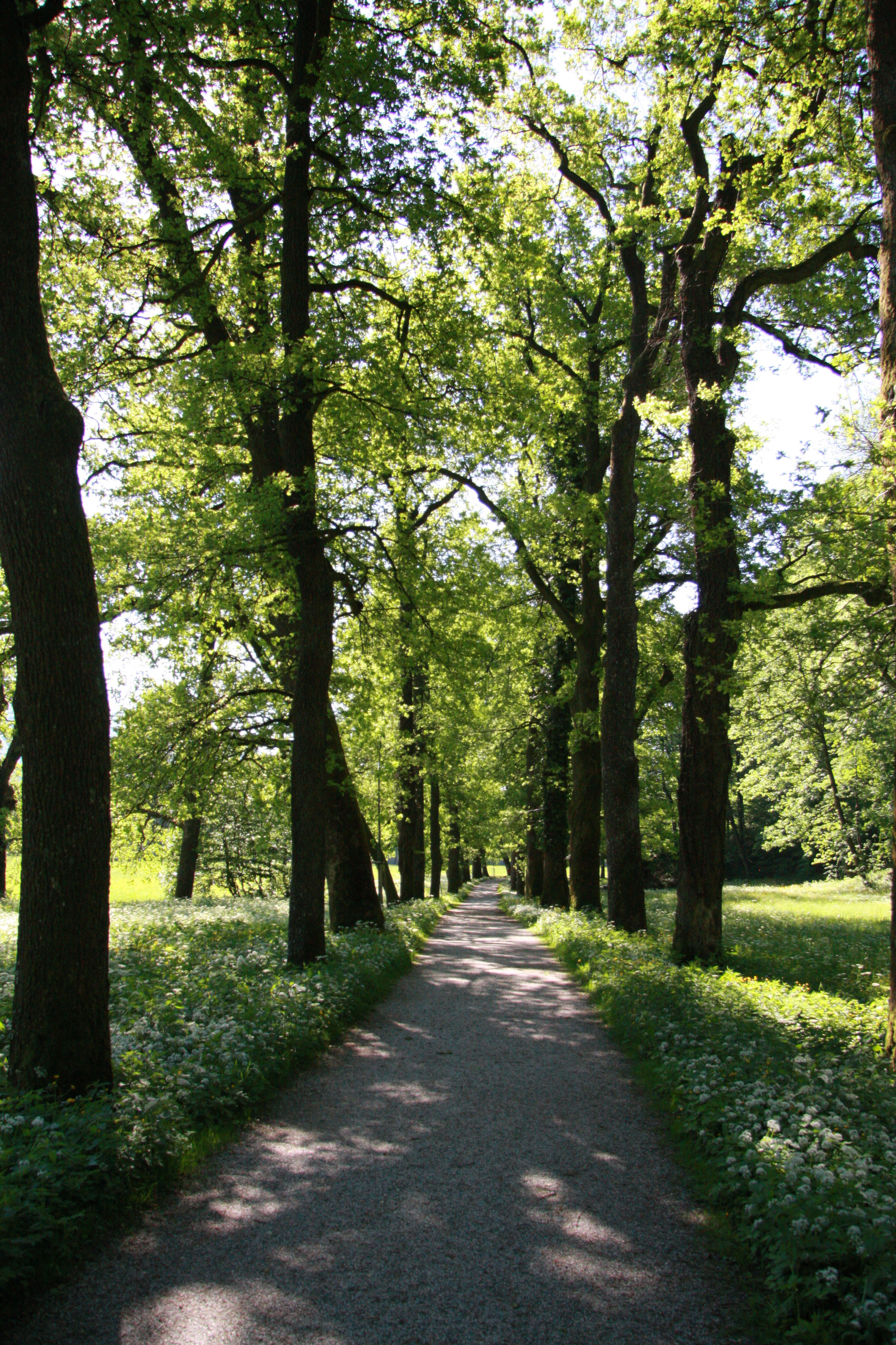 Allee