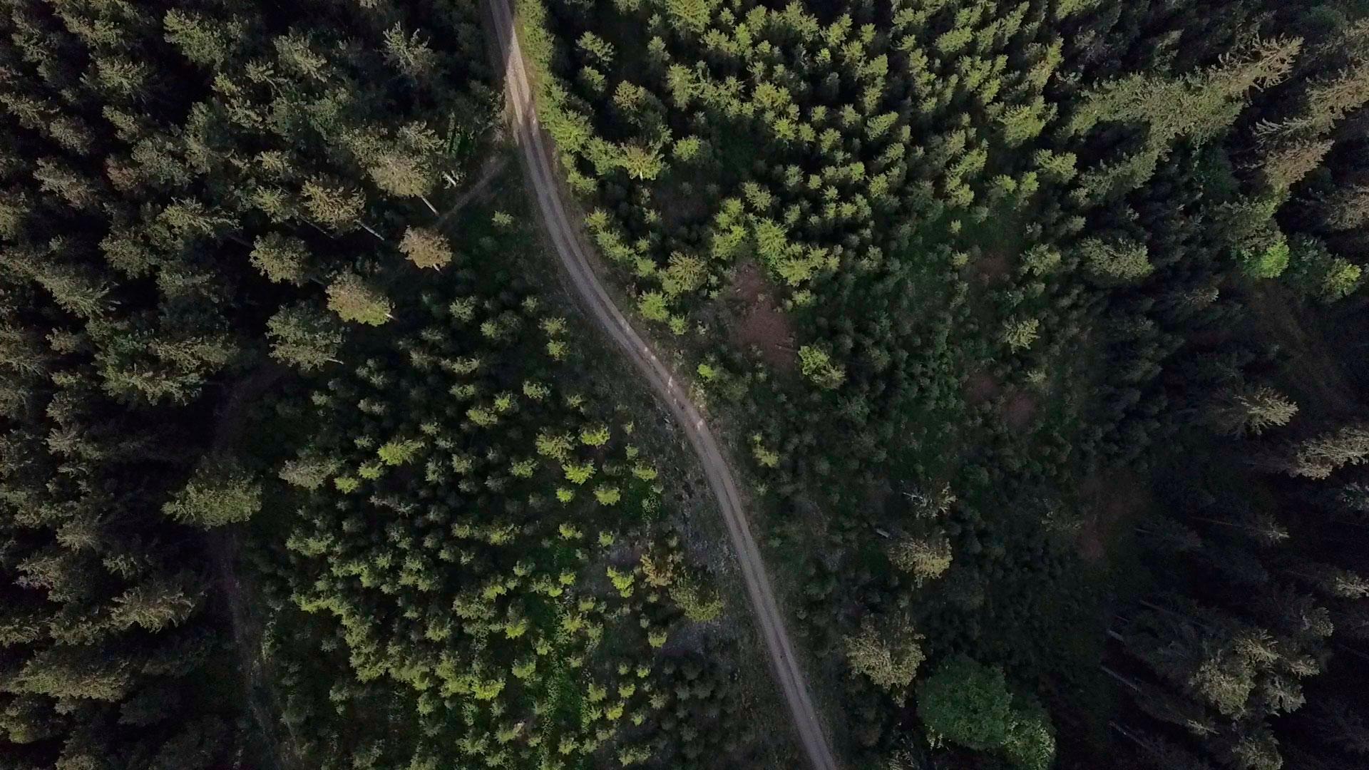 Nadelwald von oben