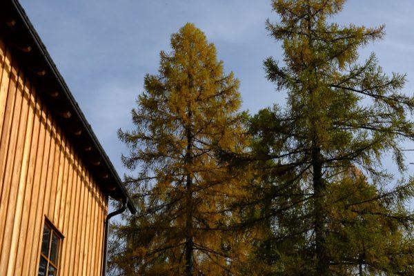 Lungauer Holzsymposium_Baum