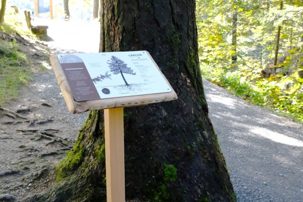 Wald Wild Holz_Eröffnung_(c)proHolz Salzburg (59)