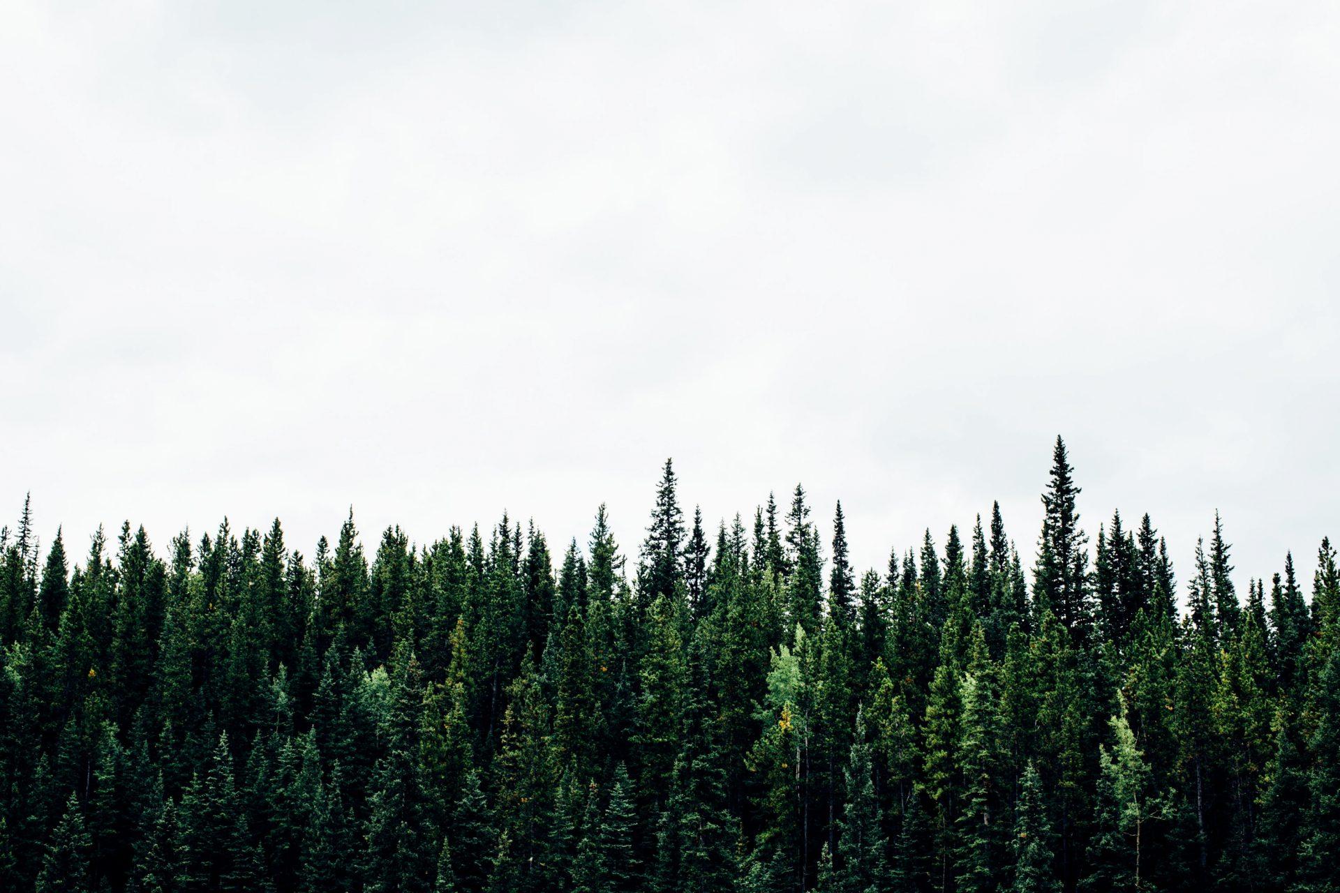 Unser Wald im Klimawandel