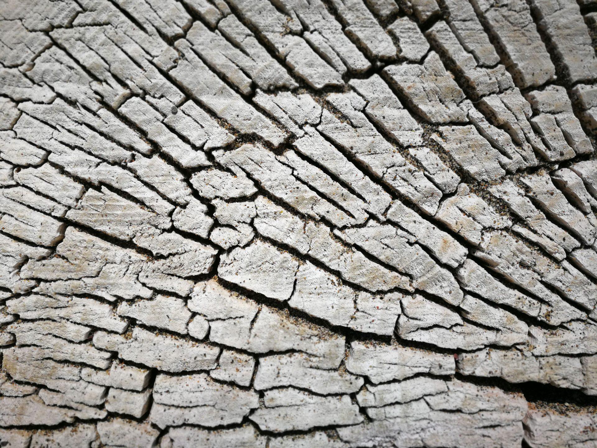 Trockenes Holz Detail